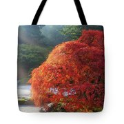 Sun Rays Over Old Japanese Maple Tree Tote Bag