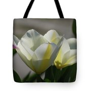 Sun Shining On A Flowering White Tulip Flower Blossom Tote Bag