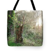 Sun Shining Through Trees In A Mysterious Forest Tote Bag