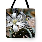 Sun Soaked Desert Lily Tote Bag