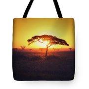 Sun Through Acacia Tote Bag