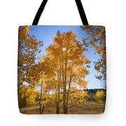 Sun Through Aspens Tote Bag by Ron Dahlquist - Printscapes