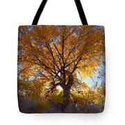 Sun Through Golden Leaves Tote Bag