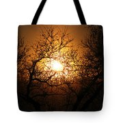 Sun Trees Tote Bag