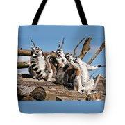 Sunbathing Ring-tailed Lemurs Tote Bag