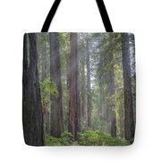 Sunbeams Through The Forest Tote Bag by Paul Schultz