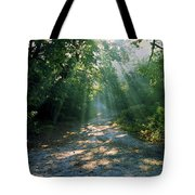 Sunbeams Through Trees Tote Bag