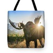 Sunburst In The Antlers Tote Bag