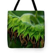 Sunflower 2017 1 Tote Bag
