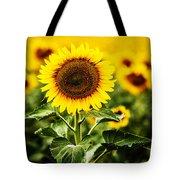 Sunflower Crops On A Farm In South Dakota Tote Bag