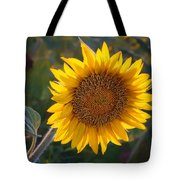 Sunflower - Facing East Tote Bag