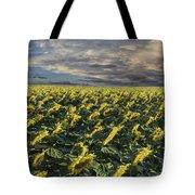 Sunflower Fields Near Denver International Airport Tote Bag