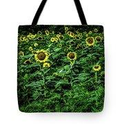 Sunflower Field Panorama Tote Bag