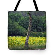 Sunflowers And Trees Growing Tote Bag