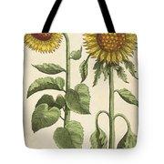 Sunflowers Illustration From Florilegium Tote Bag