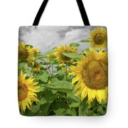 Sunflowers I Tote Bag by Dylan Punke
