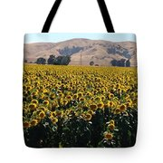 Sunflowers Of Vacaville Tote Bag
