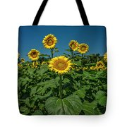 Sunflowers Weldon Spring Mo Ver1_dsc9821_16 Tote Bag