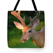 Sunkissed Buck Tote Bag