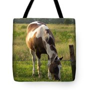 Sunkissed Tobiano Tote Bag