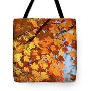 Sunlight In Maple Tree Tote Bag