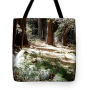 Sunlight On Path Tote Bag