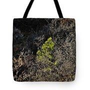Sunlight On Pine Tote Bag