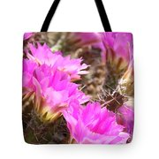 Sunlight On Pink Cactus Blooms Tote Bag
