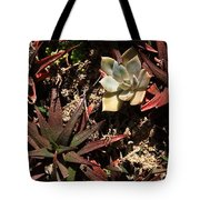 Sunlight On Succulents Tote Bag