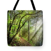 Sunlight On The Trail Tote Bag