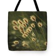 Sunlight On Wild Grasses Tote Bag