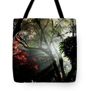 Sunlight Through The Tree In Misty Morning 1. Tote Bag