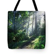 Sunlight Through Trees, Ecola State Tote Bag