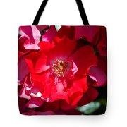 Sunlit Blooms Of Dortmund Hybrid Scots Briar Rose Tote Bag