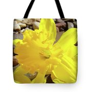 Sunlit Daffodil Flower Spring Rock Garden Baslee Troutman Tote Bag