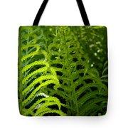 Sunlit Fern Tote Bag by Mike Evangelist