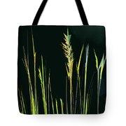 Sunlit Grasses Tote Bag