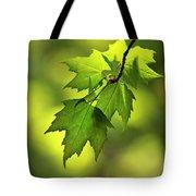 Sunlit Maple Leaves In Spring Tote Bag