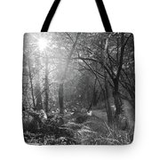 Sunlit Woods, West Dipton Burn Tote Bag