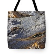 Sunning Alligator 2 Tote Bag
