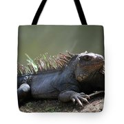 Sunning Gray Iguana Sitting Beside Water Tote Bag