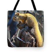 Sunning Squirrel Tote Bag