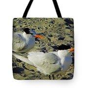 Sunning Terns Tote Bag