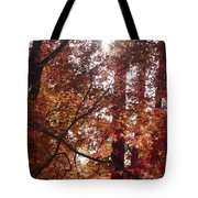 Sunny Autumn Day Poster Tote Bag