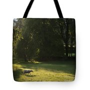 Sunny Evening Tote Bag