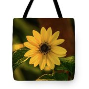 Sunrise Daisy Delray Beach Florida Tote Bag