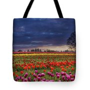Sunset At Colorful Tulip Field Tote Bag