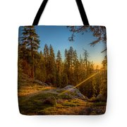 Sunset At Sequoia Tote Bag