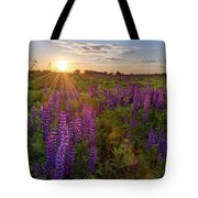 Sunset Over Meadow Of Lupine Tote Bag