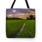 Sunset Rice Fields In Cambodia Tote Bag